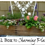 Vintage Tool Box Turns Charming Planter