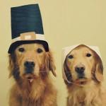 Happy Thanksgiving {and sneak peeks!}