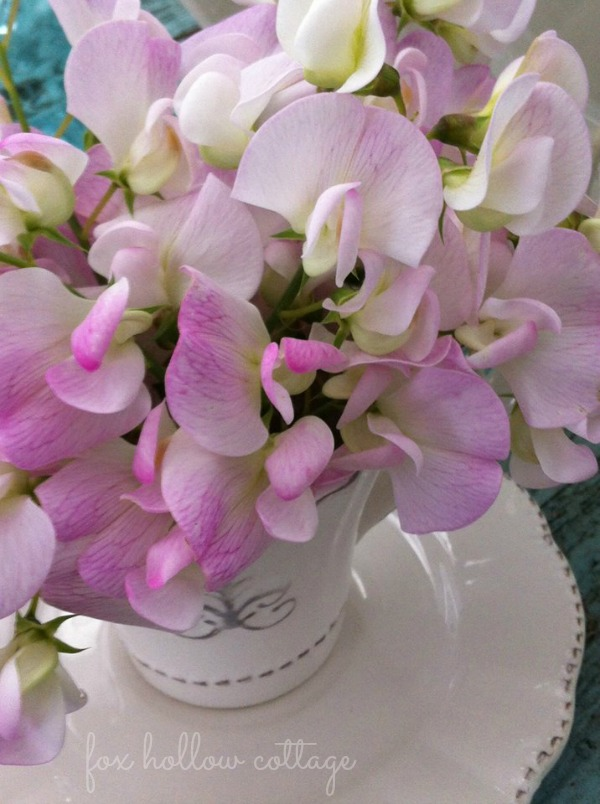 Wild Sweet Peas in a Teacup