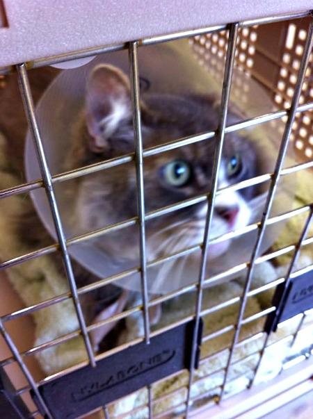Bubs at vet 1 2 2014