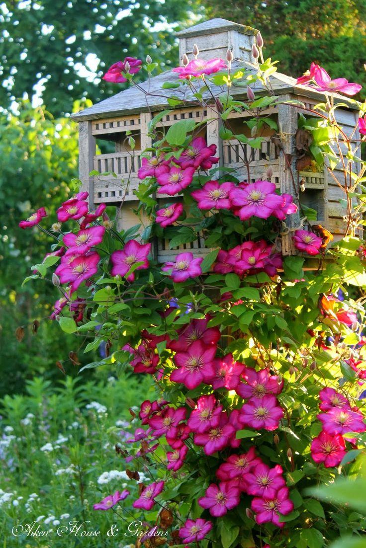 Clematis Flower Plant Vine