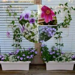 How To Make a Garden Trellis on Glass