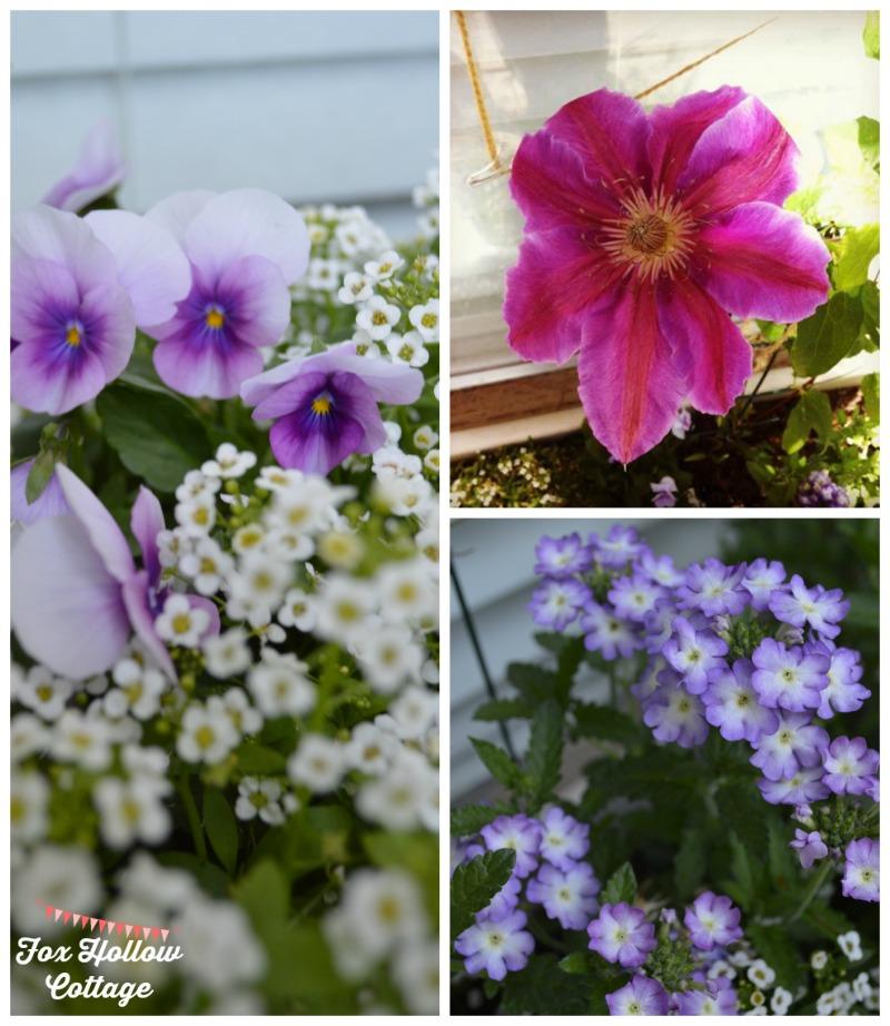 Clematis Pansy Verbena Allysum - Summer Gardening #DamageFreeDIY #ad