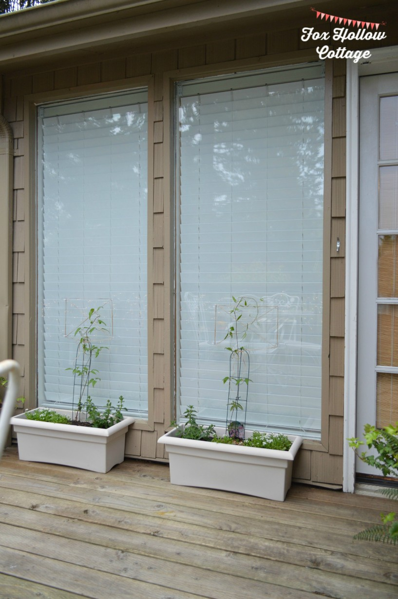Diy Garden Trellis On Glass With Command Brand Clear Hooks   #DamageFreeDIY  #ad