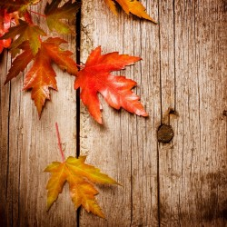 Flirting With Fall – how to get in an Autumn mood