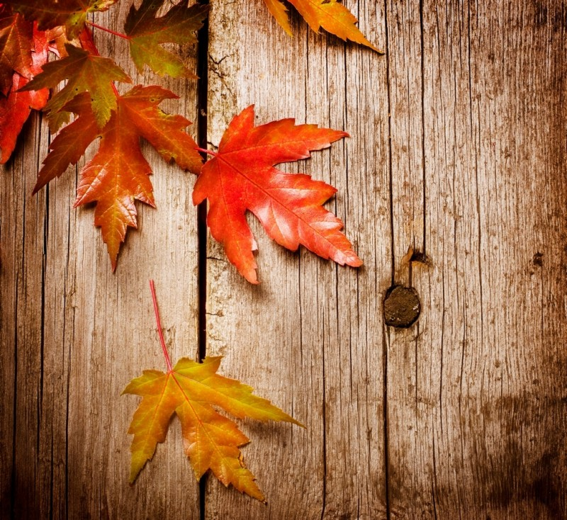 Autumn-leaves-autumn-on-tree
