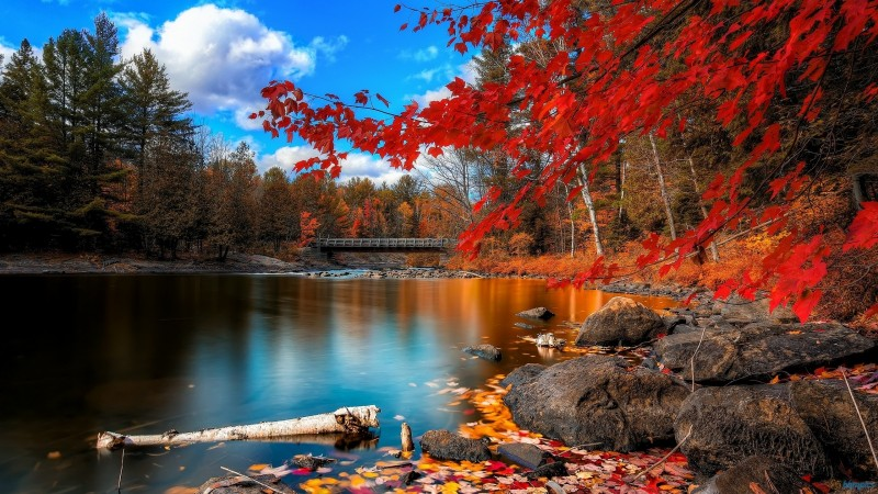 red autumn leaves water