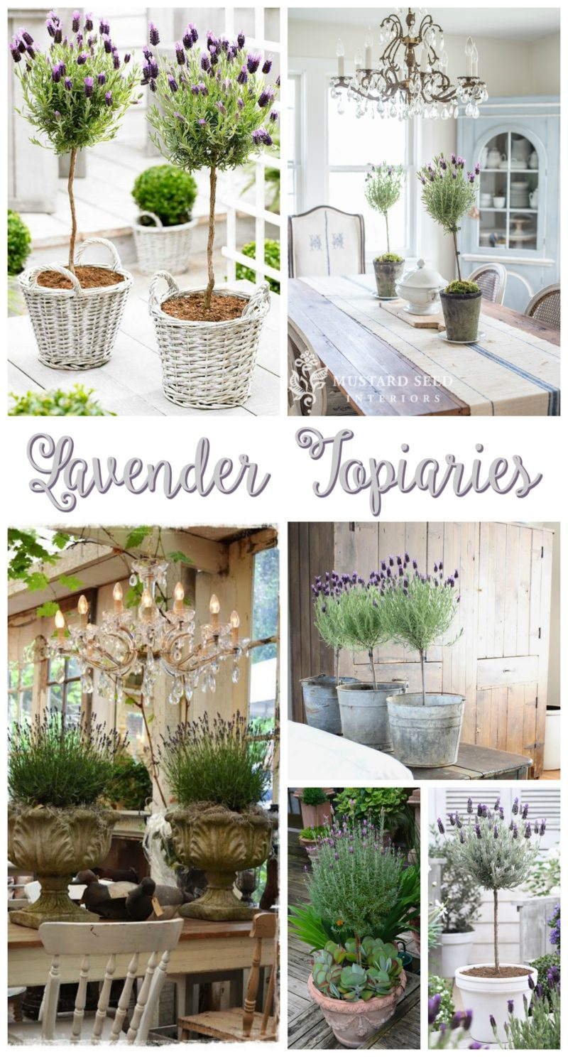 Crushing on Lavender Topiaries - tips and inspiration for planting indoors