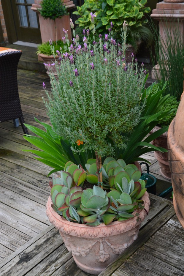 garden-in-August-8-620x929