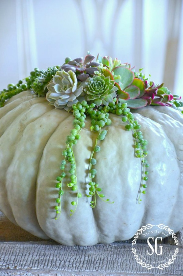succulent-top-pumpkin, 31 Fabulous Pumpkin Decorating Ideas