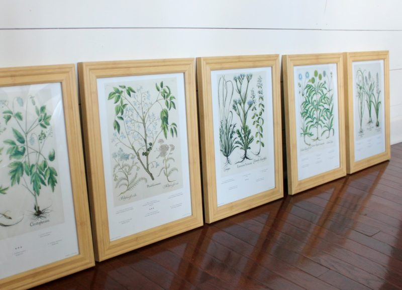 Botanical Gallery Wall Tutorial