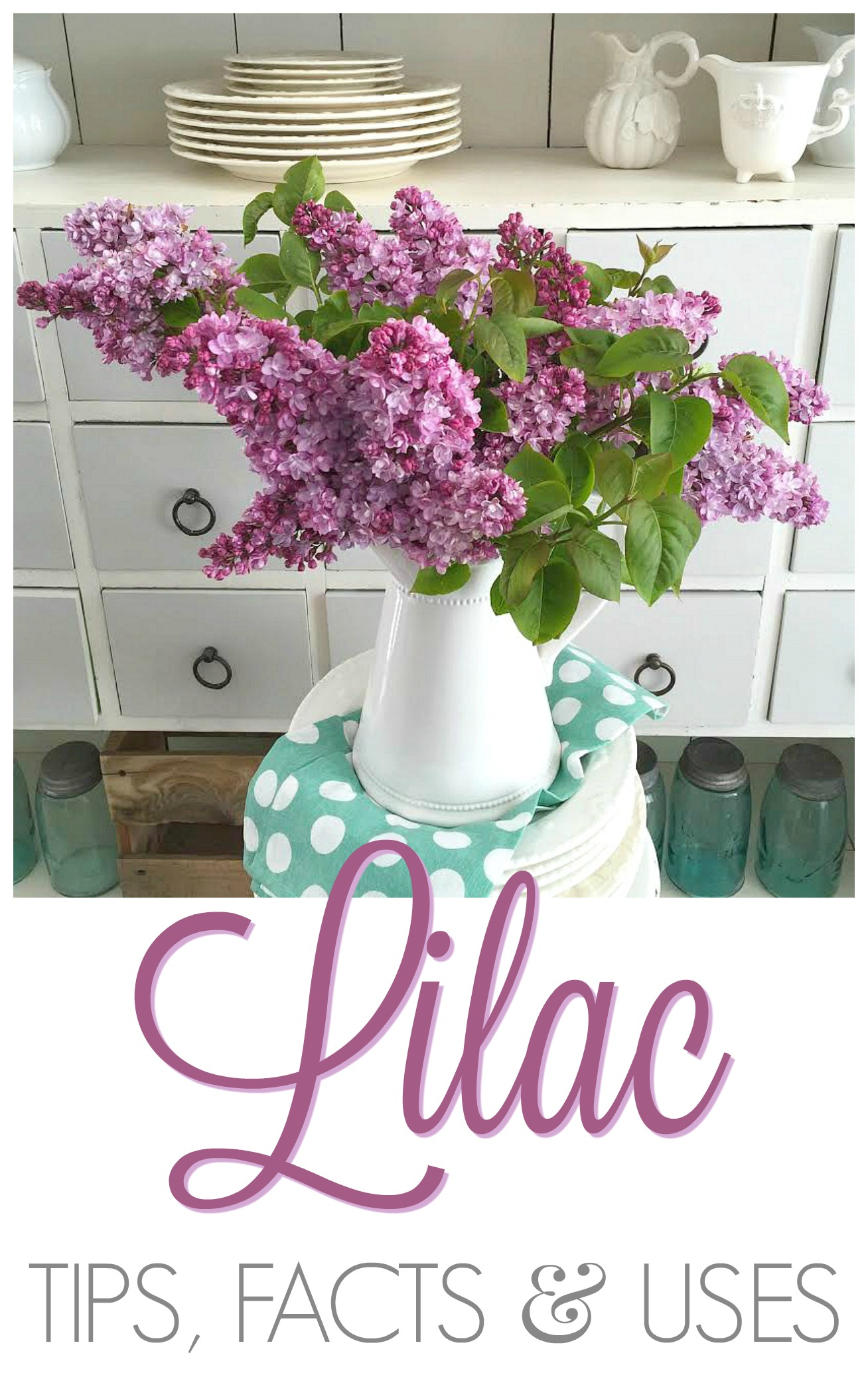 Lilac flower blossom tips facts uses - foxhollowcottage.com - cottage farmhouse living
