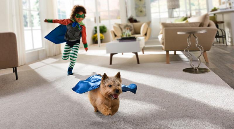 The Best Pet Friendly Carpet Choice Fox Hollow Cottage