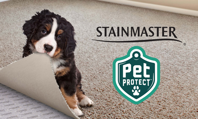 Flooring America Stainmater PetProtect Carpet Information and Sale - sponsored pin