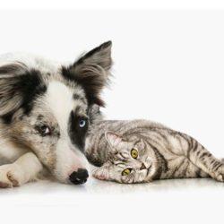 The Best Pet Friendly Carpet Choice