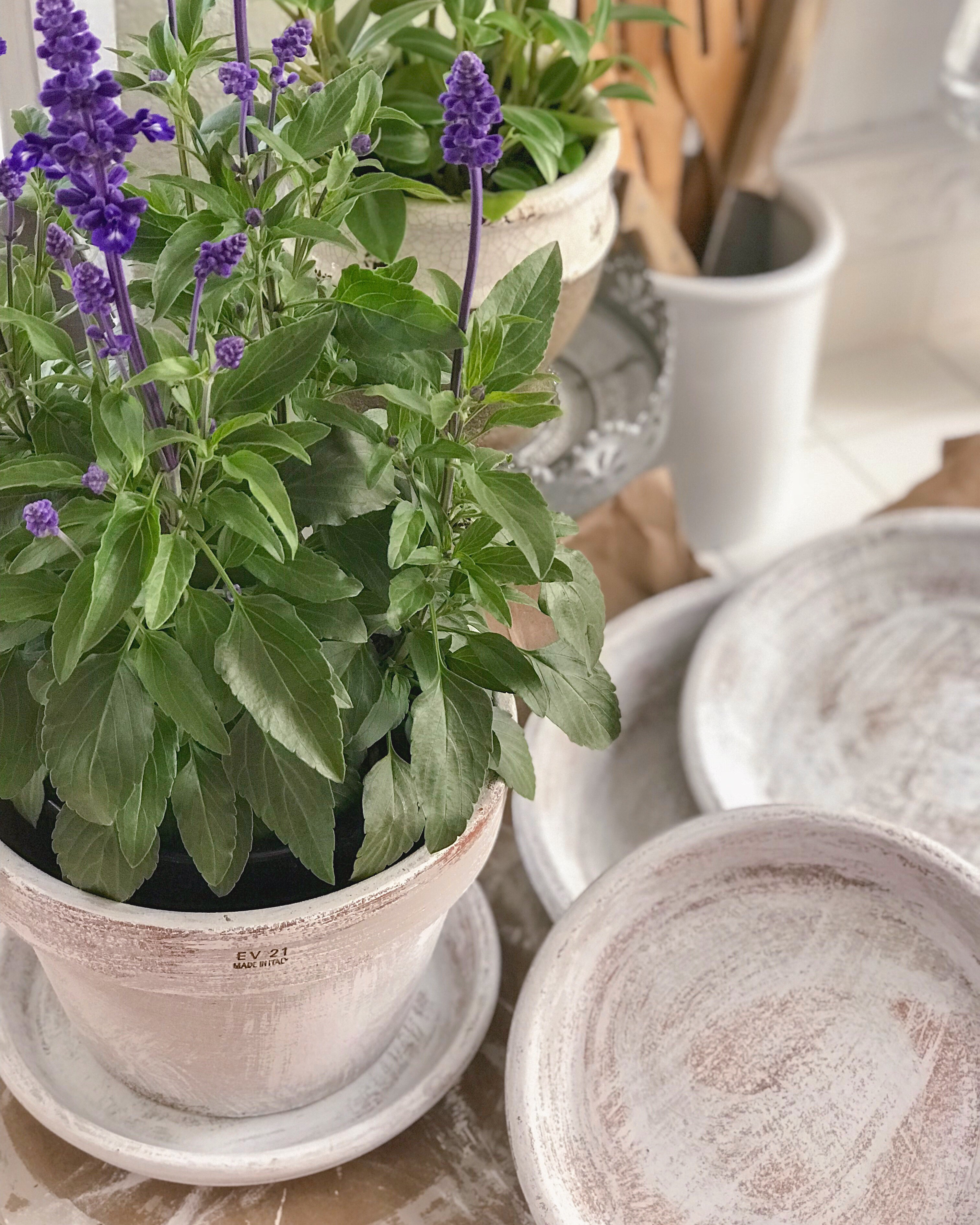Beautiful Aged Terracotta Pot Paint Makeover Fox Hollow Cottage
